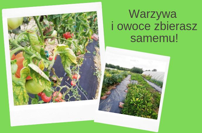zbieramy od rolników warzywa i owoce