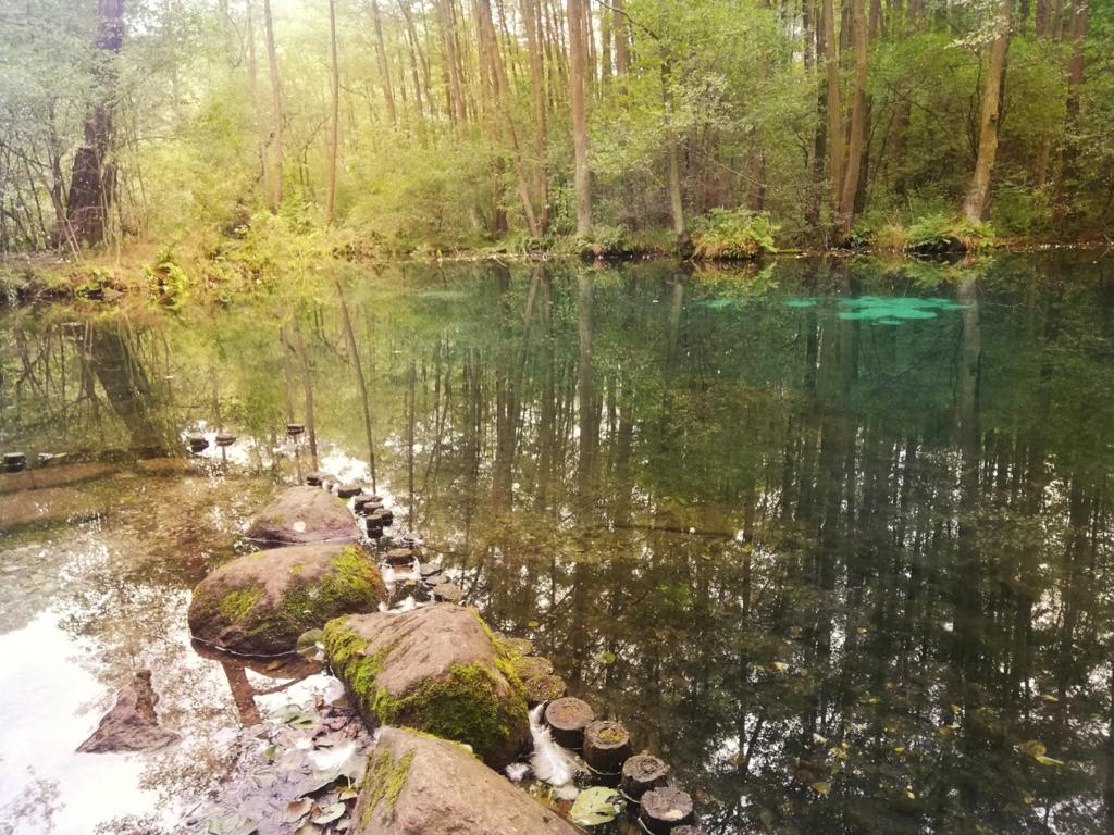 Rezerwat przyrody Niebieskie Źródła czy warto zobaczyć?