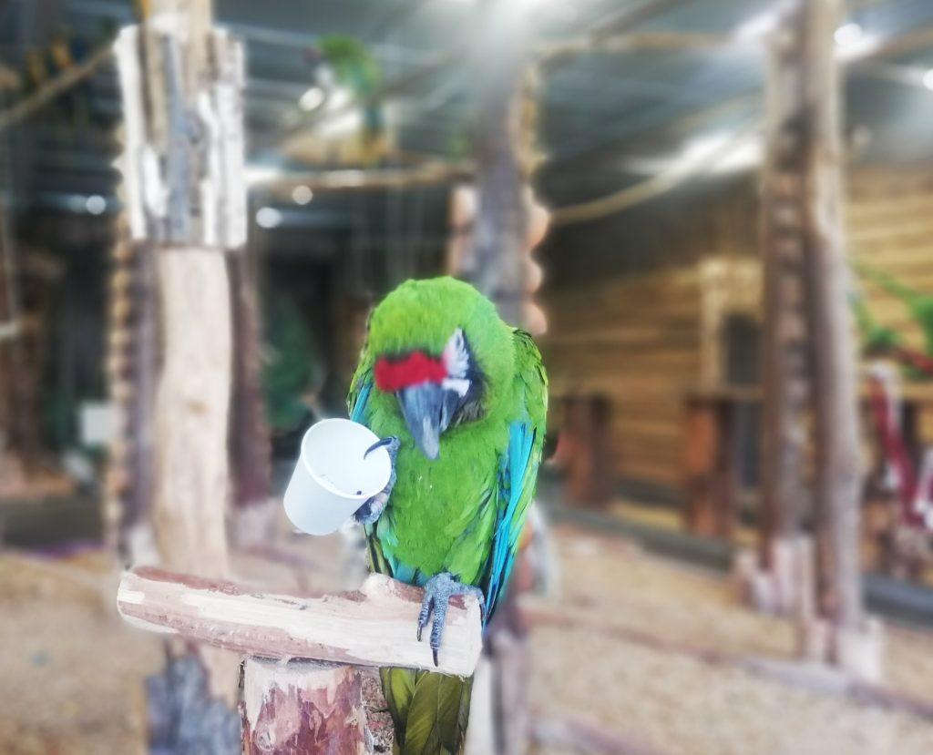 Papugarnia - czy warto się udać