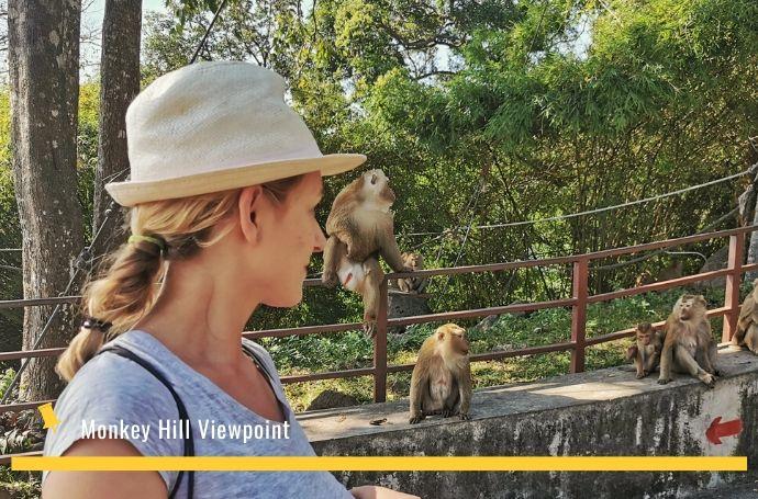 fotka z małpkami